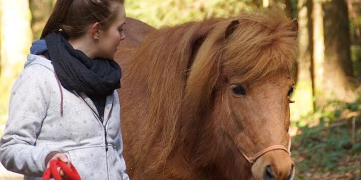 Magnus Horse Sense Coach