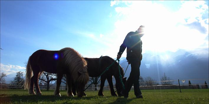 Magnus Horse Sense Führungsrolle