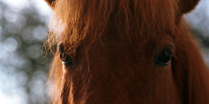 Magnus Horse Sense Pferdespiegel