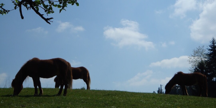 Magnus Horse Sense Stressabbau