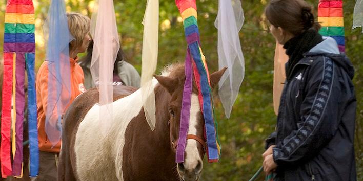 Magnus Horse Sense für Lehrpersonen