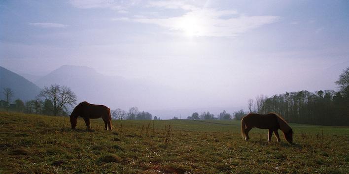Magnus Horse Sense Referate
