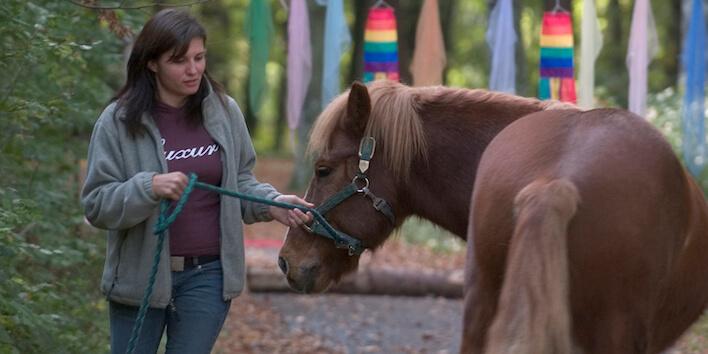 Magnus Horse Sense Einzelcoaching