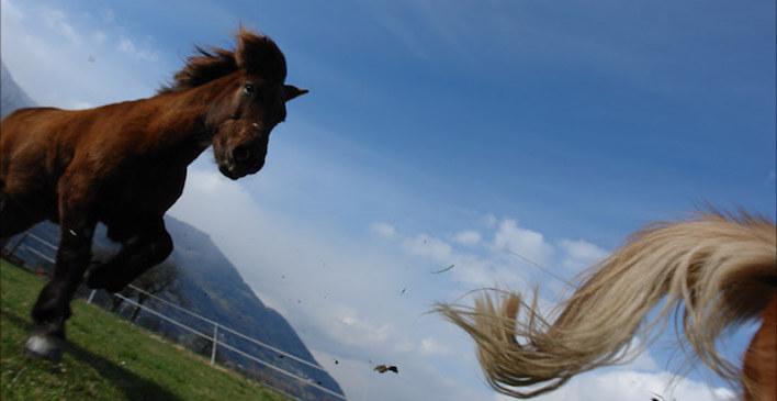 Magnus Horse Sense Impulstage