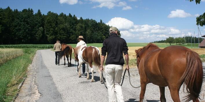 Magnus Horse Sense Führungslehrgang