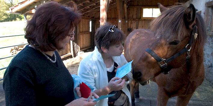 Magnus Horse Sense Referenzen
