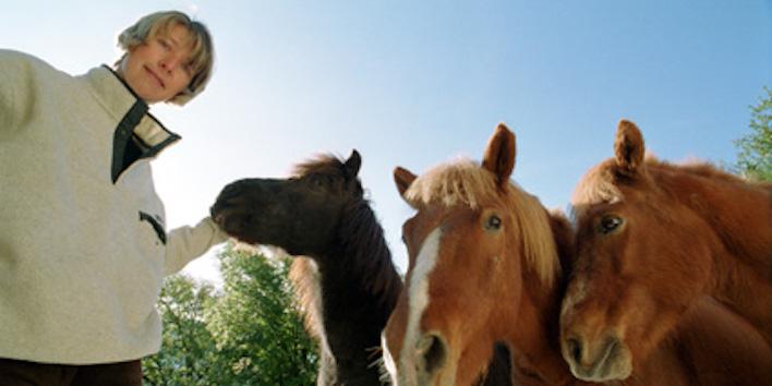 Magnus Horse Sense Selbsttest