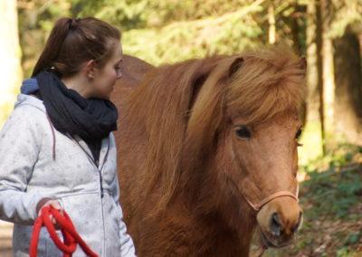 Unterwegs mit Pferden